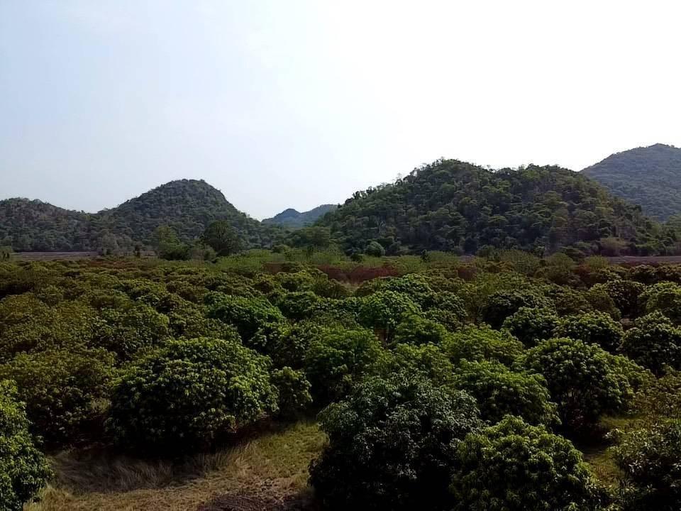 ขายที่ดินแปลงสวย แก่งคอย มีภูเขาโอบล้อมด้านหน้า และด้านหลัง