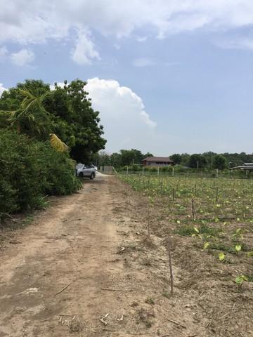 ขายที่ 1 ไร่ ใกล้ โรงเรียนห้วยนาคราช กาญจนบุรี ที่ดินเป็นสวนมีปลูกกล้วย มะพร้าว พร้อมเก็บผลผลิตได้