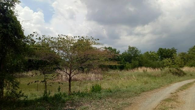 ขายที่ดิน4ไรj กลางใจเมืองสระบุรีใกล้โรงพยาบาลสระบุรี 0849924497