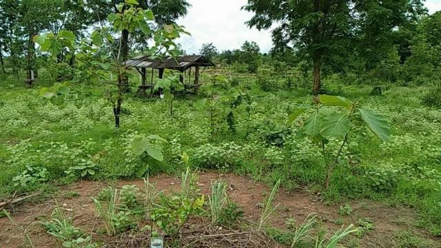 ขายที่ดินสำหรับปลูกบ้านทำสวน หรือปลูกป่า อ.เถิน จ.ลำปาง